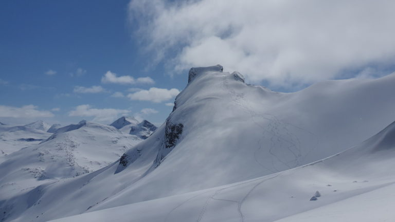 Bilde av Storebjørn fra Bjørnskardet